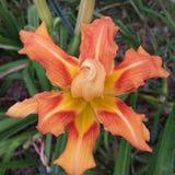 Erstaunliche Blume Lizenzfreies Stockfoto