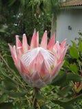 Erstaunliche Blume Stockfoto