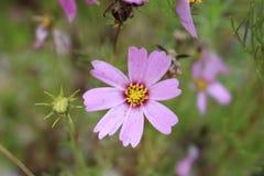 Erstaunliche Blume auf dem Feld stockbild