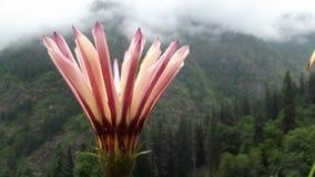 Erstaunliche Blume im keeriganga Lizenzfreies Stockbild