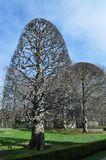 Erstaunliche Bäume Stockbild