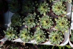 Erstaunliche bunte Frühlingsblumen in der Natur stockfoto