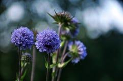 Erstaunliche Farbe von Gebirgsblumen lizenzfreies stockbild