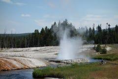 Erstaunliche Farben, die einen Geysir an Yellowstone-Park umgeben Stockfotos
