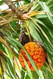 Erstaunliche Frucht Stockfotos