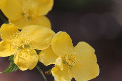 Erstaunliche gelbe Blumen, die am Morgen lächeln Lizenzfreies Stockfoto