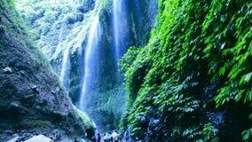Erstaunliche Gesamtlänge des tropischen Wasserfalls stock footage