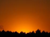Erstaunliche goldene Abstufung des Sonnenunterganghimmels über dem Schattenbild des Landschaftswaldes Stockbild