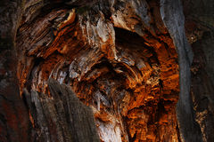 Erstaunliche Höhle im Baum Stockfotografie