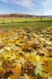 Erstaunliche Herbstlandschaft Lizenzfreies Stockfoto