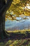 Erstaunliche Herbstmorgenansicht über Landschaftslandschaft Stockfotografie