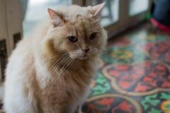 Erstaunliche Katze Lizenzfreie Stockbilder