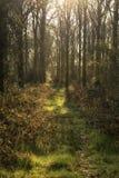 Erstaunliche Landschaft des frühen Morgens Waldim frühjahr mit Sonnenlicht Stockbild