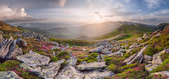 Erstaunliche Landschaft mit Blumen Lizenzfreie Stockfotos