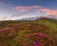 Erstaunliche Landschaft mit Blumen Stockfotografie