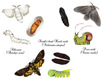 Erstaunliche Natur eingestellt - Motten Stockfotografie