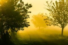 Erstaunliche Naturlandschaft mit Bäumen und Landstraße am Morgen nebeln ein Szenische Landschaft des Herbstes von Süd-Moray in de Stockbilder