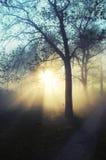 Erstaunliche nebelige Landschaft Lizenzfreies Stockfoto