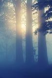 Erstaunliche nebelige Landschaft Lizenzfreie Stockfotos