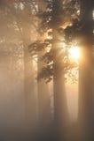 Erstaunliche nebelige Landschaft mit Bäumen Lizenzfreie Stockbilder