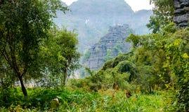 Erstaunliche Panoramaansicht der Reisfelder, der Kalksteinfelsen und der Bergspitze Pagode von Hang Mua Temple-Standpunkt Lizenzfreies Stockfoto