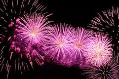 Erstaunliche purpurrote Feuerwerke auf schwarzem Hintergrund Lizenzfreie Stockfotografie
