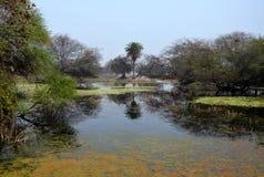 Erstaunliche Reserve Stockbild