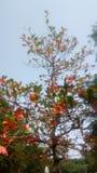 Erstaunliche rote Blume lizenzfreie stockfotos
