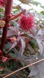 Erstaunliche rote Frucht Geschenke der Natur Lizenzfreies Stockfoto