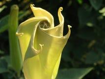 Erstaunliche schöne gelbe Blume gardening Lizenzfreie Stockbilder