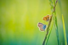Erstaunliche Schmetterlingswiesenlandschaft gegen bokeh Hintergrund lizenzfreie stockfotografie