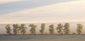 Erstaunliche Sommer-Morgen-Landschaft mit einigen Bäumen auf gewelltem Wiesen-Hintergrund, gutes ökologisches Konzept stockbilder