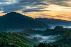 Erstaunliche Sonnenaufgangansicht an der Teeplantage Stockfotos