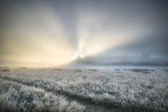 Erstaunliche Sonnenstrahlen leuchten Nebel durch starken Nebel von Autumn Fall Lizenzfreie Stockfotos