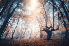 Erstaunliche Szene mit Herbstbäumen im Nebel Herbstlicher Wald stockbilder
