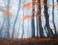 Erstaunliche Szene mit Herbstbäumen im Nebel Herbstlicher Wald stockbild