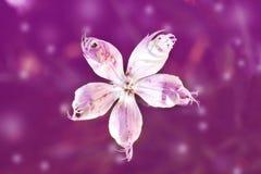 Erstaunliche weiße Blume auf rosa bokeh Hintergrund Stockbild