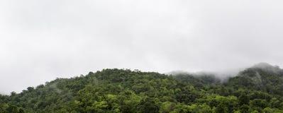 Erstaunliche wilde Naturansicht der tiefen immergrünen Waldlandschaft auf Sonnenlicht an der Mitte des Sommers Stockfoto
