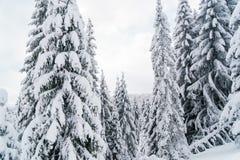 Erstaunliche Winterbäume mit weißen Niederlassungen in den Bergen Lizenzfreies Stockfoto