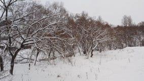 Erstaunliche Winterlandschaft des Frostholzes, schneebedeckte Hügel Luftfliege oben durch gezierte Baumaste vom nebelhaften Wald  stock video footage