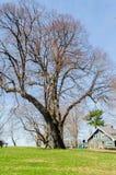 Erstaunlicher alter Baum in einem Park Stockfoto