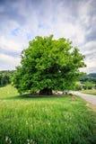 Erstaunlicher alter Lindenbaum unter großartigem Himmel in linn Aargau-hdr lizenzfreie stockbilder