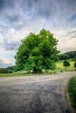 Erstaunlicher alter Lindenbaum unter großartigem Himmel in linn Aargau-hdr lizenzfreies stockfoto