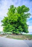 Erstaunlicher alter Lindenbaum unter großartigem Himmel in linn Aargau-hdr lizenzfreies stockbild