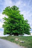 Erstaunlicher alter Lindenbaum unter großartigem Himmel in linn Aargau-hdr stockfotografie