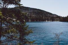 Erstaunlicher Ansichtwald und Berge und Schnee Lizenzfreie Stockfotografie