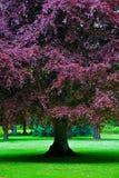 Erstaunlicher Baum im Park Stockbild
