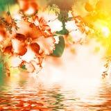 Erstaunlicher Blumenstrauß Lizenzfreie Stockbilder