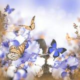 Erstaunlicher Blumenstrauß von Frühlingsveilchen Lizenzfreie Stockfotos