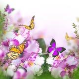 Erstaunlicher Blumenstrauß von Frühlingsveilchen Stockfotografie